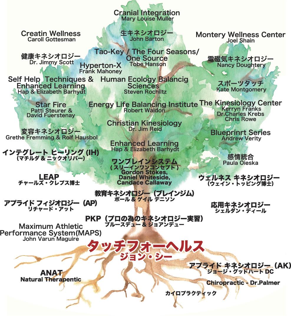 タッチフォーヘルス発展樹林図